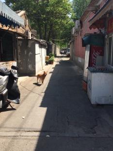 Hutong, Dongsi, Beijing